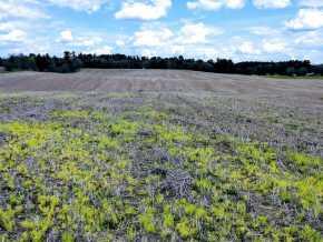 New Auburn Land Real Estate