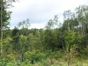 Spooner Land Real Estate